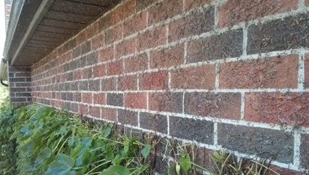 Ivy Removal to Prevent Water Penetration in Masonry Walls