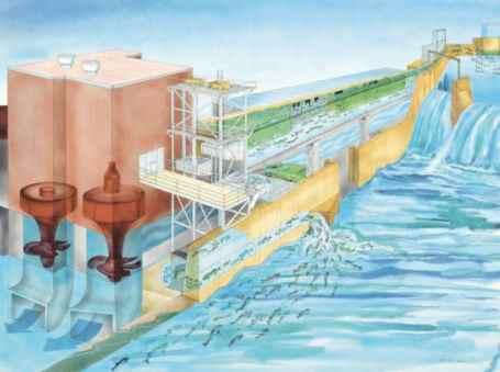 Fish Lift Procedure, Holyoke Dam, USA