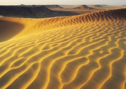 Which type of soil is present in desert?