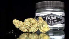 Orange Tree Strain Review - Pau Hana Supply Co - The Contact