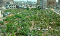 Farming Starts in Cities - Resilience