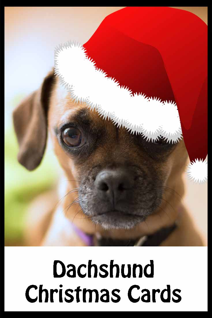 Dachshund Christmas Cards Perfect For All Doxie Lovers