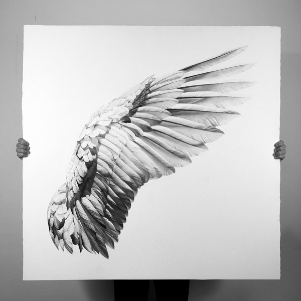 Cool Wing Drawings