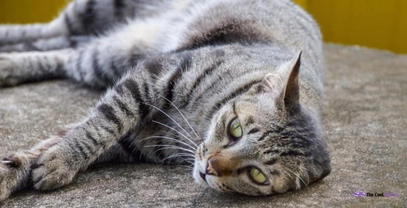 Tabby Cat Names Female