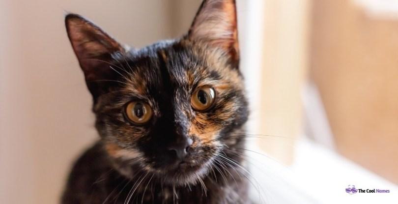 Unisex black cat names