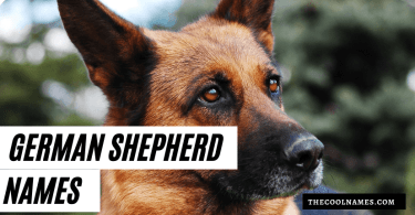 Cool German Shepherd Names