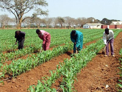 ZAMBIA: 30 dairy cooperatives receive seed, fertiliser