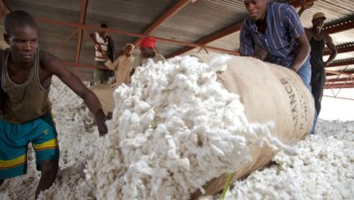 Farmers reject Shs 1000 set price for Cotton