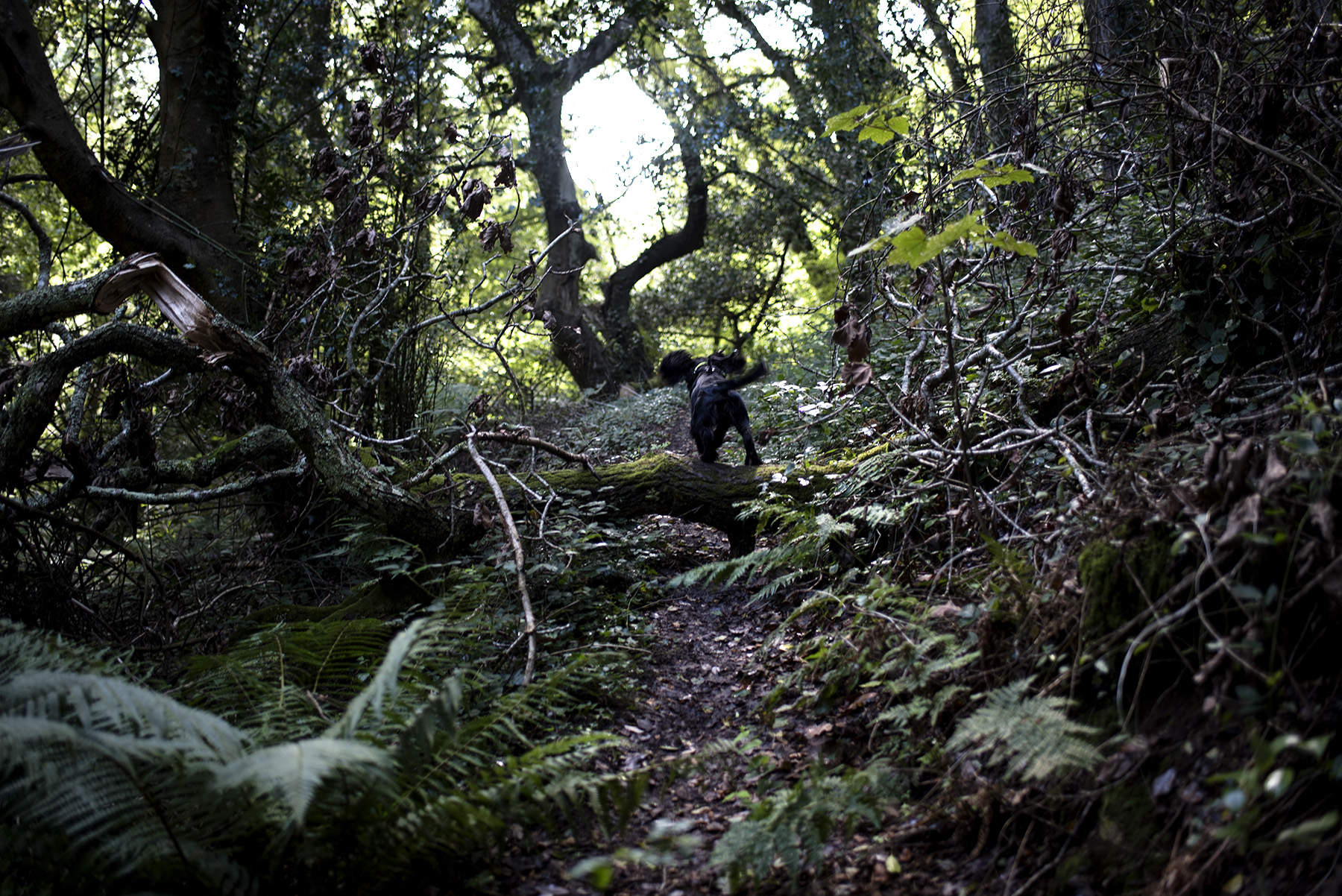 Carwinion Woods | The Cornish Dog