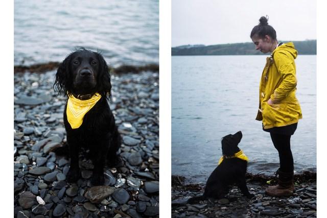 Carwinion Woods | The Cornish Dog