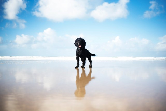 Perranporth Beach | Our Favourite Winter Beaches | The Cornish Dog