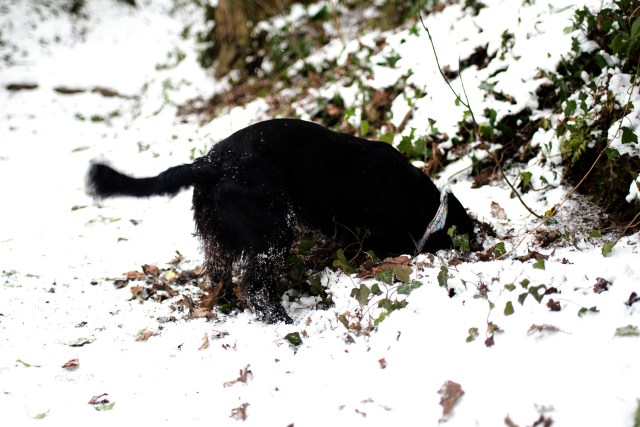 Woody's First Snow Day | The Cornish Dog