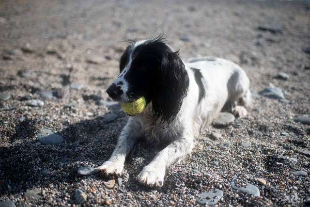 Dog Friendly Beaches in Cornwall | The Cornish Dog