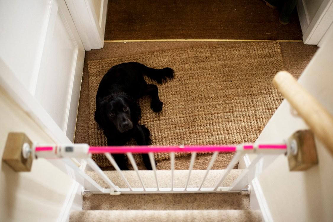 New Dog Essentials | The Cornish Dog