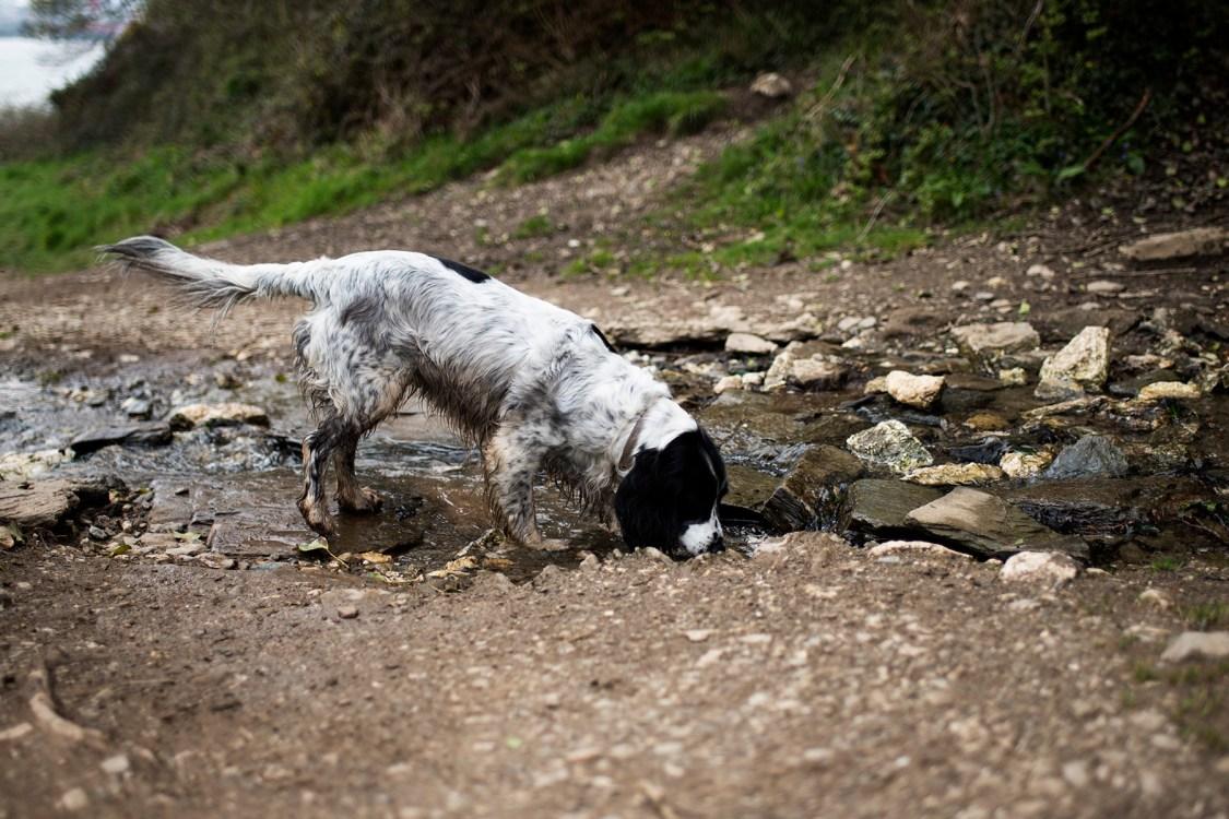 Trefusis Point | The Cornish Dog