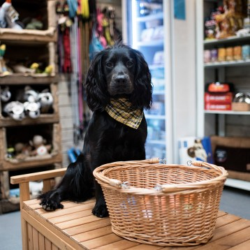Treats and Boutiqes | Paws in Padstow