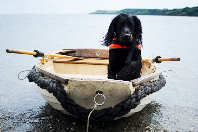 Grebe Beach | The Cornish Dog