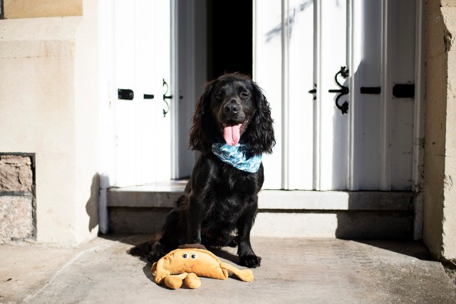 The Cornish Dog in Bristol | The Cornish Dog
