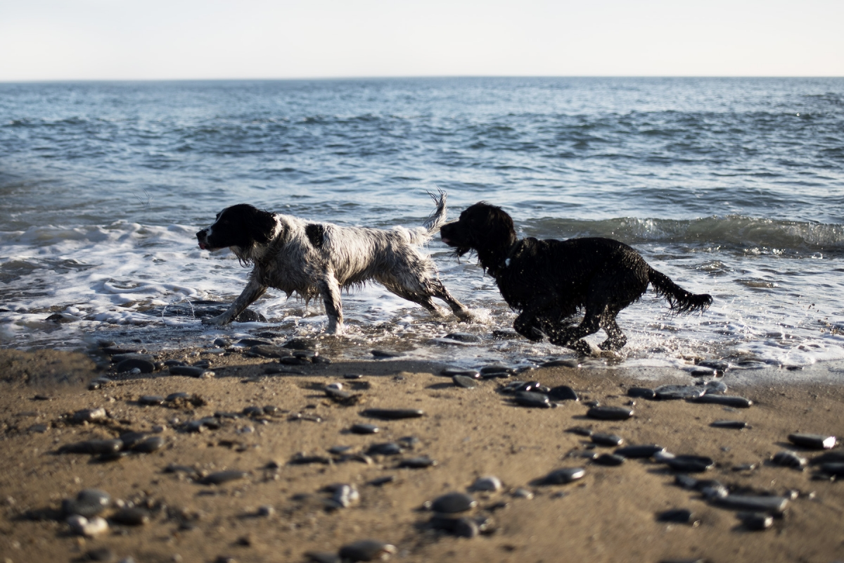 How Woody Helps ME | The Cornish Dog