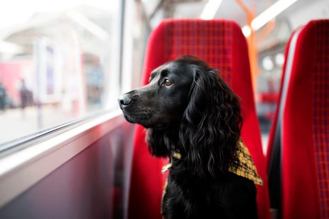 The Cornish Dog in London | The Cornish Dog