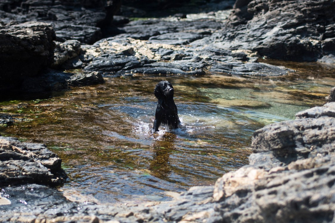 Decluttering with your Dog | The Cornish Dog