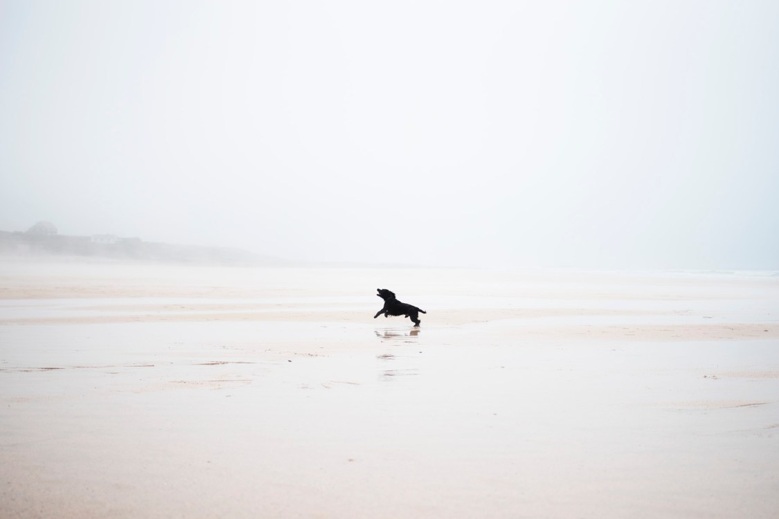 Constantine Bay | The Cornish Dog