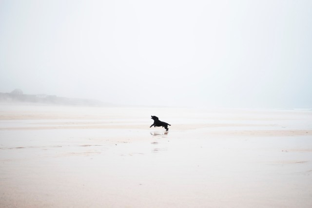 Constantine Bay | The Cornish Dog