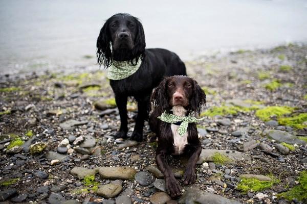 Carwinion Bandana   The Cornish Dog