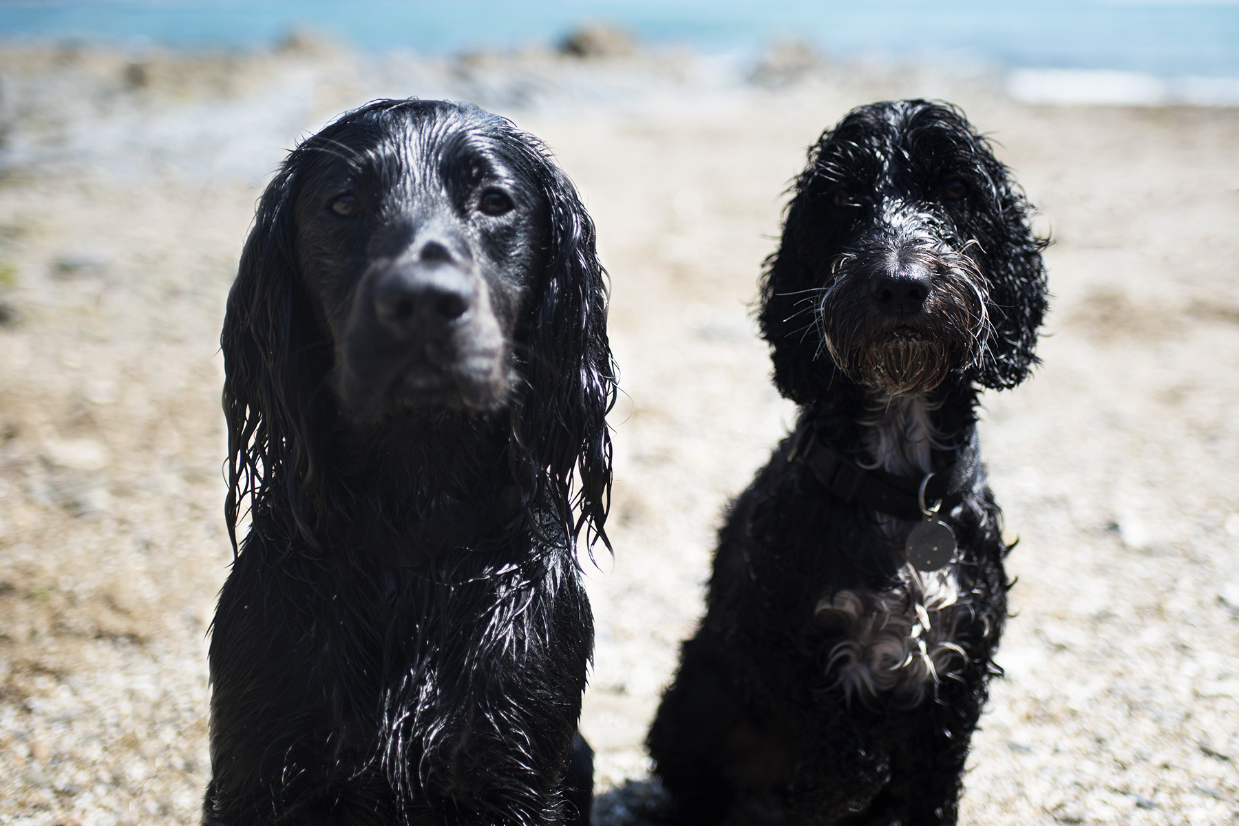 Seasalt Cornwall | The Cornish Dog