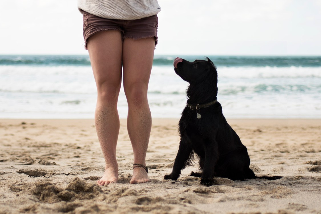 How Much Does it Cost to Own a Dog? | A Capsule Wardrobe for Dog Owners | The Cornish Dog