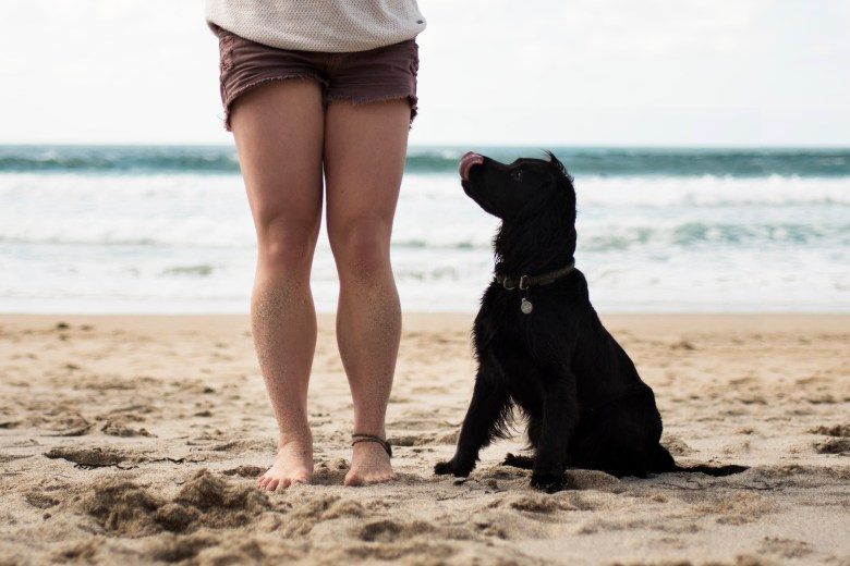 How Much Does it Cost to Own a Dog?   A Capsule Wardrobe for Dog Owners   The Cornish Dog