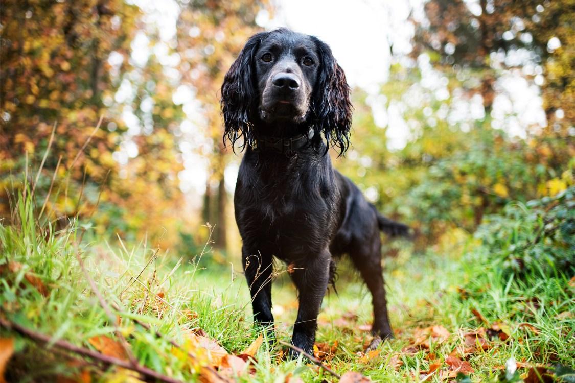 Idless Woods | The Cornish Dog