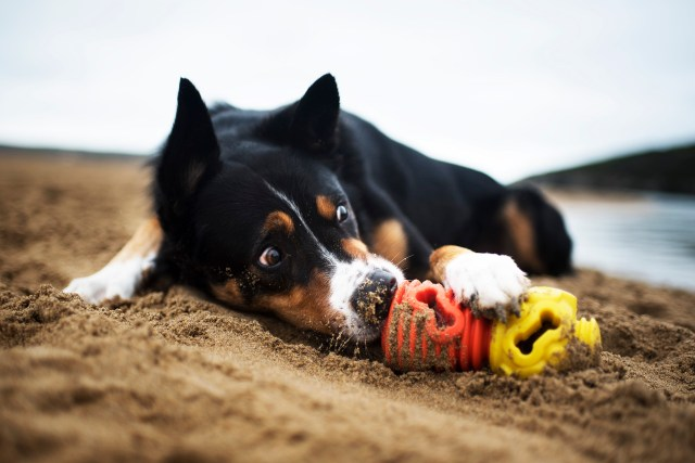 K9 Connectables Dog Toys | The Cornish Dog