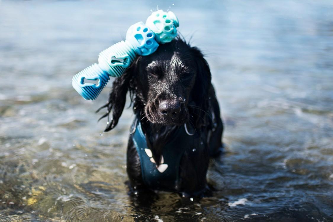 K9 Connectables | The Cornish Dog