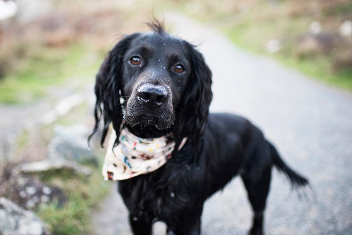 Kynance Cove | The Cornish Dog