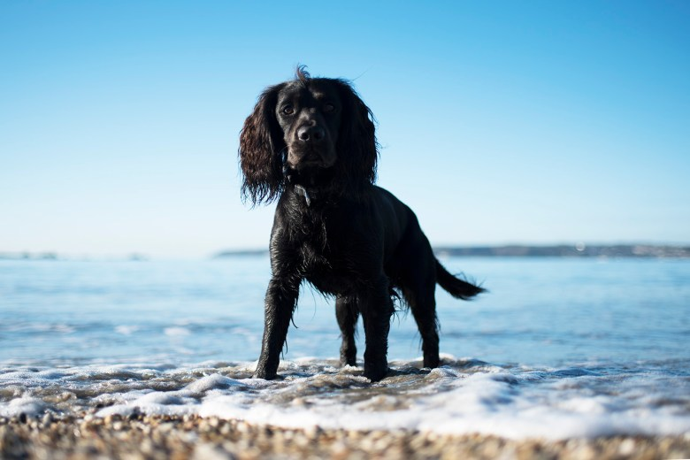 Why We Swapped Back to Plastic Poo Bags   The Cornish Dog