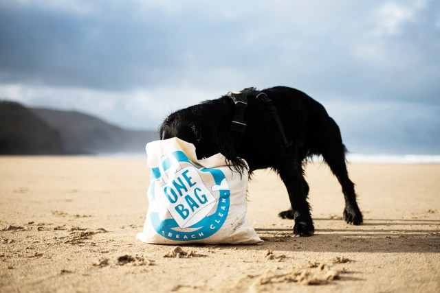 A Dog Friendly Beach Clean with Cornish Creatives | The Cornish Dog