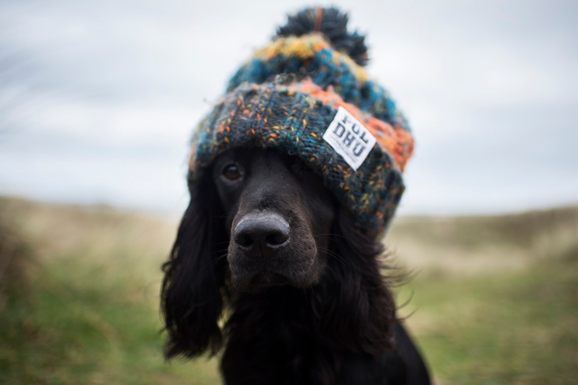 Winter Dog Walking Essentials | The Cornish Dog