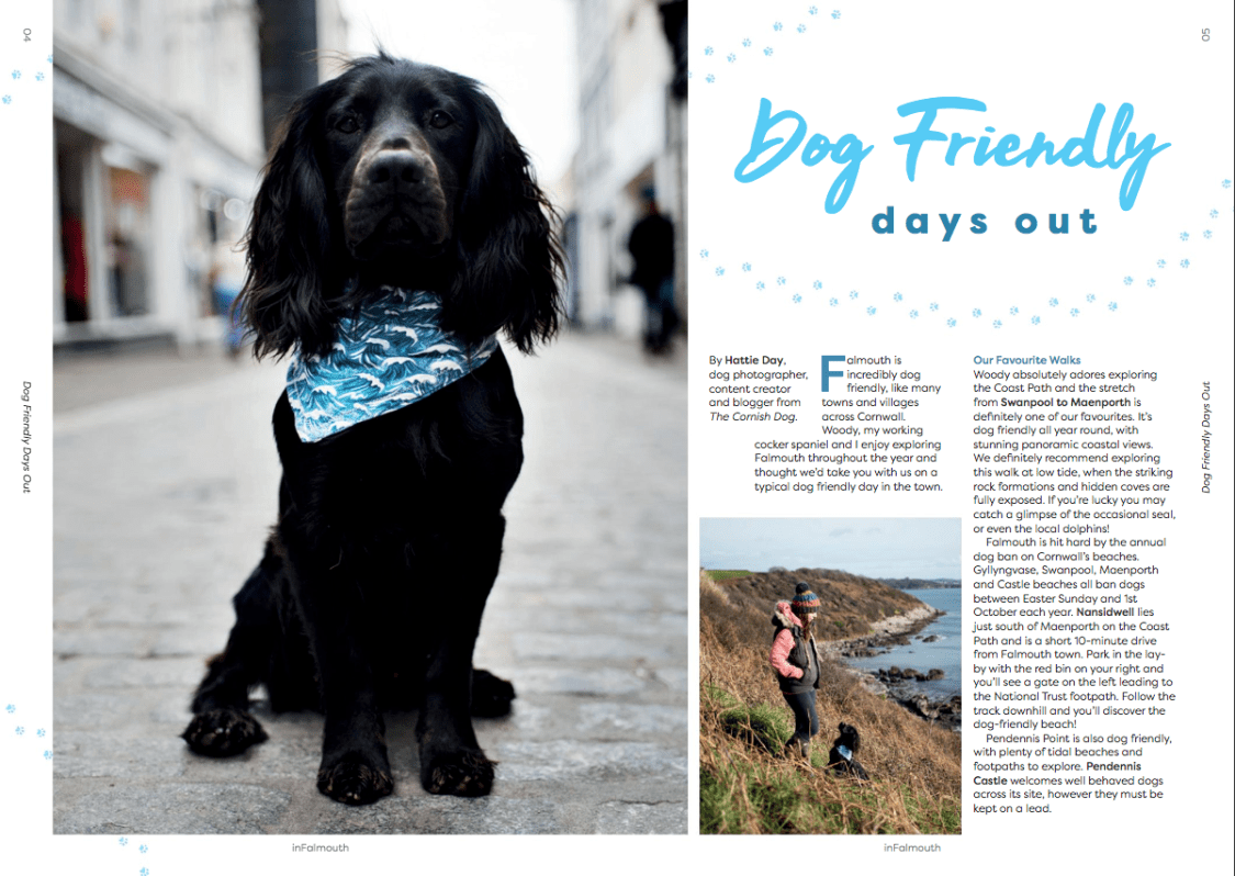 InFalmouth Magazine | The Cornish Dog
