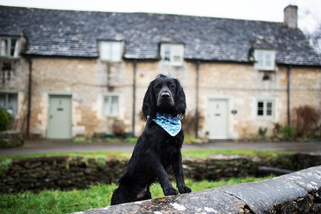 Visit Wiltshire   The Cornish Dog