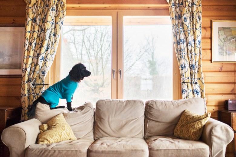 Log House Holidays   The Cornish Dog