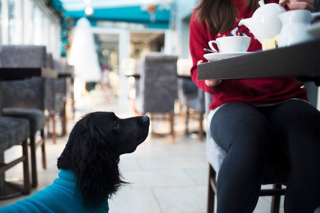 Talland Bay Hotel   The Cornish Dog