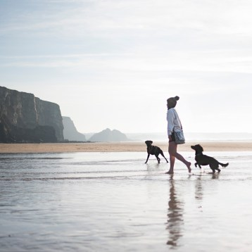 In Defence of Cornwall's Dog Ban