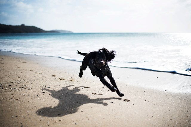 In Defence of Cornwall's Dog Ban | The Cornish Dog