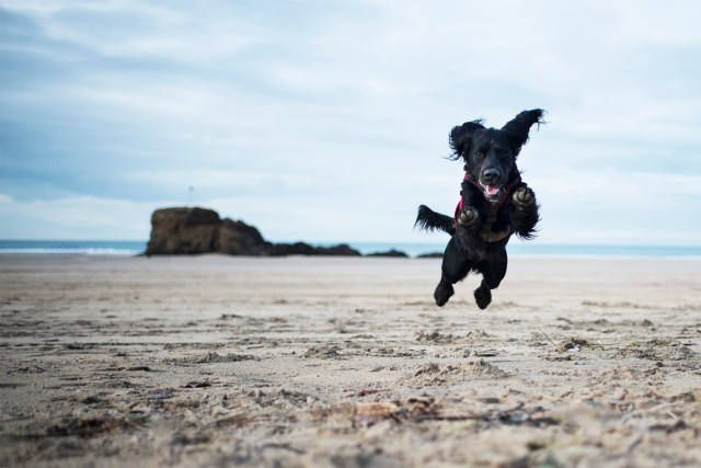 Dog Friendly Beaches in Cornwall We're Excited to Visit | The Cornish Dog