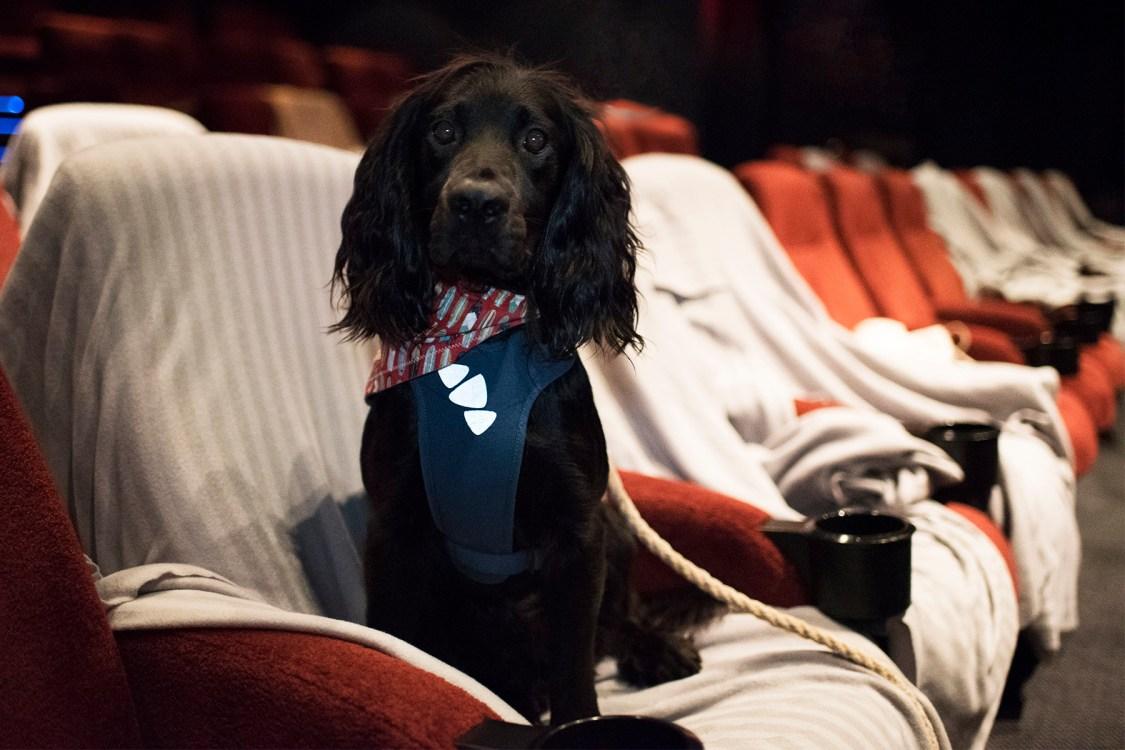 Dog Friendly Cinema Screening Exeter | The Cornish Dog