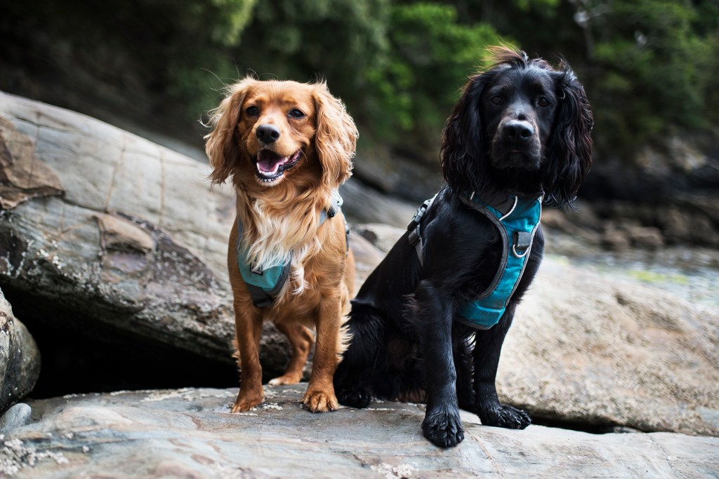 Choosing a Harness for Your Dog | The Cornish Dog