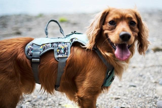 3 Peaks Excursion | The Cornish Dog