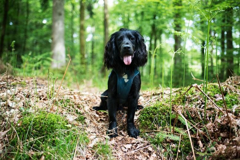 Hurtta Active Harness | The Cornish Dog