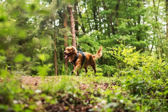 Hurtta Active | The Cornish Dog